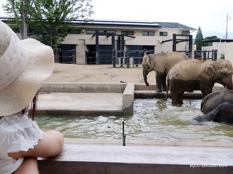 elephants at the Kyoto City Zoo